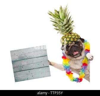 funny frolic summer pug dog with hawaiian flower garland and pineapple hat, holding wooden sign, isolated on white background - Stock Photo