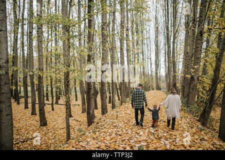 Rear view of parents and son walking while holding hands in forest during autumn - Stock Photo