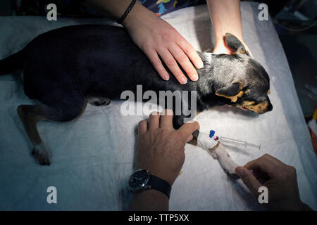 Overhead view of dog being examined by veterinarians in clinic - Stock Photo
