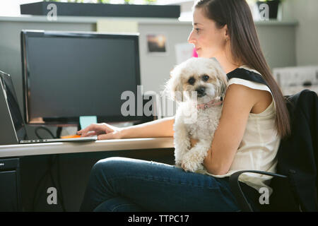 Portrait of dog being carried by businesswoman using laptop computer at desk in office - Stock Photo