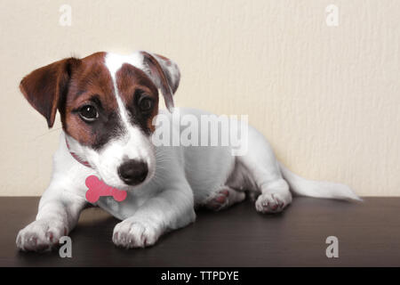 Cute small dog Jack Russell terrier on light background - Stock Photo