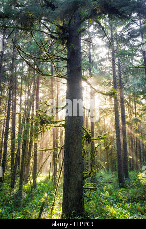 Trees and plants growing in Redwood National and State Parks - Stock Photo