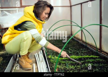 Side view of woman loosening soil with gardening fork while crouching in greenhouse - Stock Photo