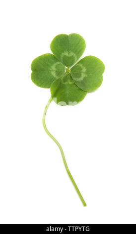 Green four-leaf clover isolated on white - Stock Photo