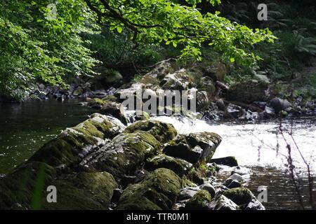 Rapids along the River Dart Flowing Through Hembury Woods on a Late Summers Afternoon. Buckfastleigh, Dartmoor, Devon, UK. - Stock Photo