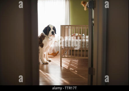 Dog sitting on floor while baby boy sleeping in crib seen through doorway - Stock Photo