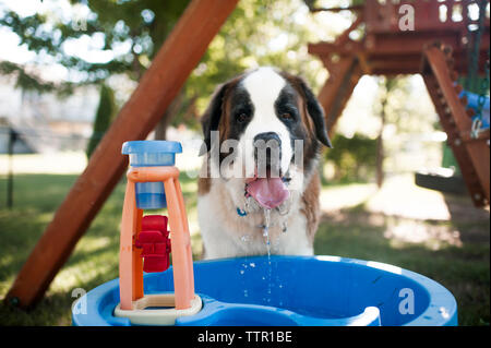 Portrait of dog drinking water from container at playground - Stock Photo