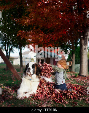 Toddler boy plays in leaves with Saint Bernard dog in backyard - Stock Photo