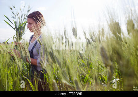 Female farmer holding freshly harvested wheat plants on field - Stock Photo
