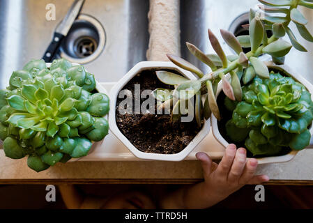 Cropped image of boy hand reaching for succulent plants in kitchen - Stock Photo