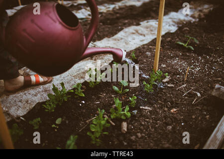 Low section of woman watering plants at community garden - Stock Photo