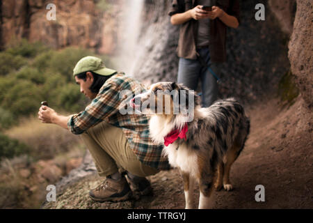 Friends using phone besides dog standing at forest - Stock Photo