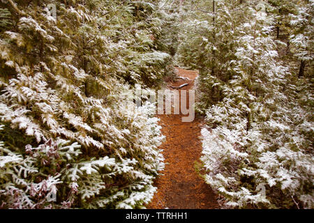 Pathway amidst trees in forest during winter - Stock Photo