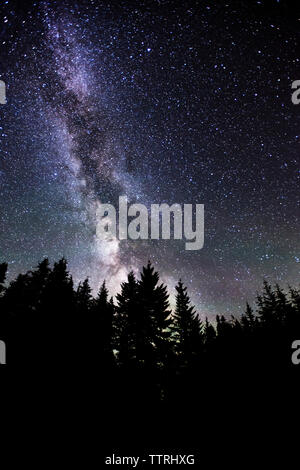 Low angle view of silhouette trees against milky way at night - Stock Photo