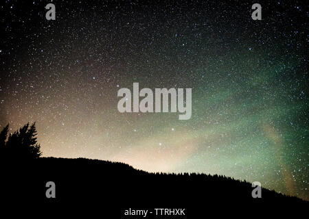 Low angle view of silhouette trees against starry sky at night - Stock Photo