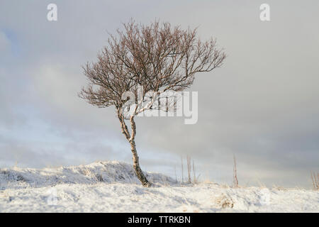 Bare tree on snowy field against cloudy sky - Stock Photo