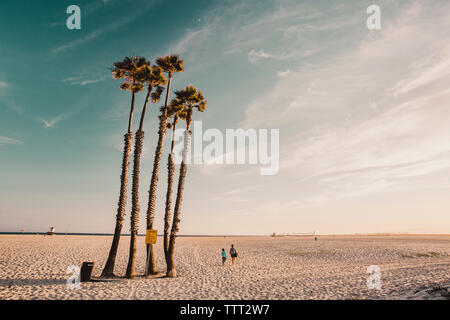 People walking by palm trees on beach against sky - Stock Photo