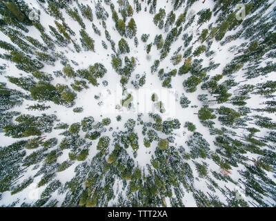Overhead view of snow covered forest - Stock Photo