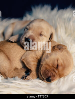 Close-up of puppies sleeping on rug at home - Stock Photo