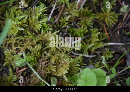 Moss growing on the forest floor - Stock Photo