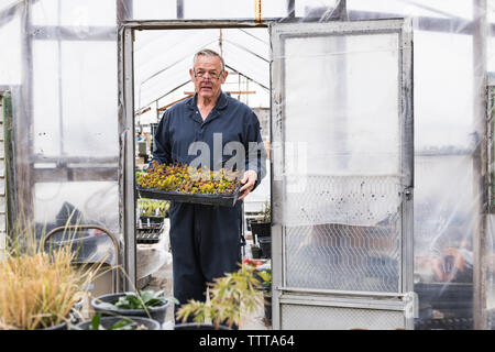 Portrait of man holding seedling tray while standing at greenhouse - Stock Photo