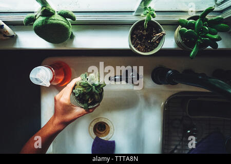Cropped hand of teenage boy arranging plants on window sill in kitchen at home - Stock Photo