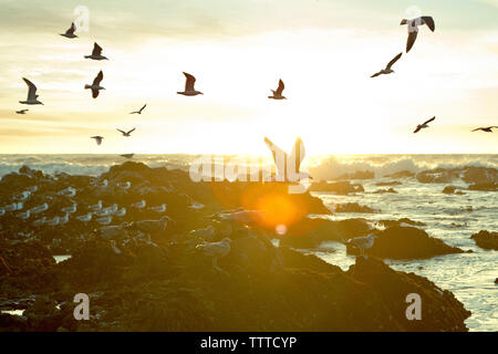 Seagulls flying over coastline against sky during sunset - Stock Photo