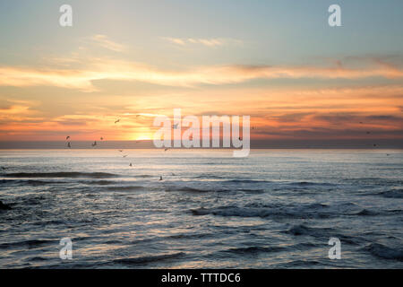 Silhouette birds flying over sea against sky during sunset - Stock Photo