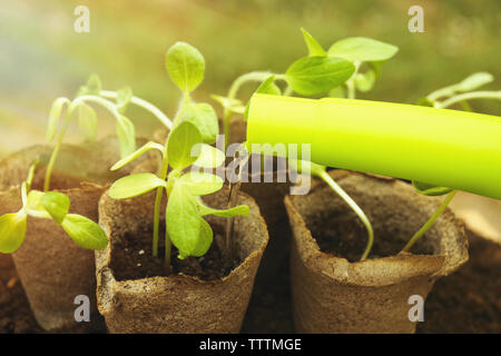 Water pouring from watering can on seedling in garden Stock Photo