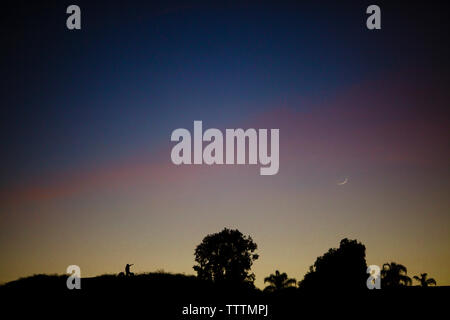 Scenic view of silhouette trees against sky during sunset - Stock Photo