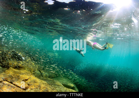 Woman swimming by fishes under water - Stock Photo