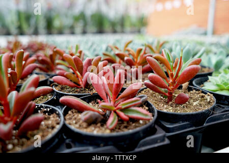 Beautiful house plants in pots - Stock Photo