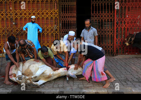 Animals slaughtered in the street for the biggest Muslim festival Eid-ul-Azha also known as the Eid of Sacrifice at  Dhaka, Bangladesh. - Stock Photo