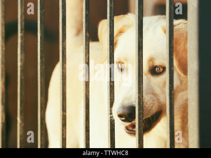 Portrait of homeless dog in animal shelter cage - Stock Photo
