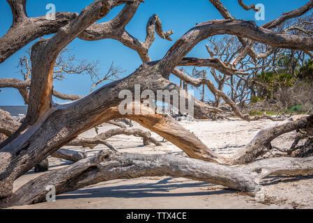Driftwood Beach on Jekyll Island in Southeast Georgia. (USA) - Stock Photo
