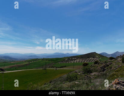 Olive Groves and plantations set amongst the rolling hills of a small valley in Spain near to Antequera, with large mountains in the distance. Spain. - Stock Photo