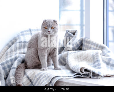 Cute cat sitting on window sill covered with soft plaid - Stock Photo