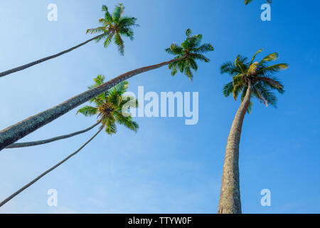 Coconut palm trees over blue sky. - Stock Photo