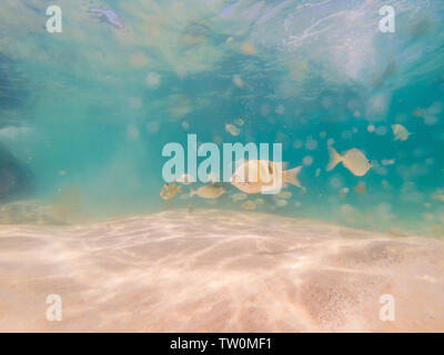 Beautiful tropical fish on the white sand beach - Stock Photo