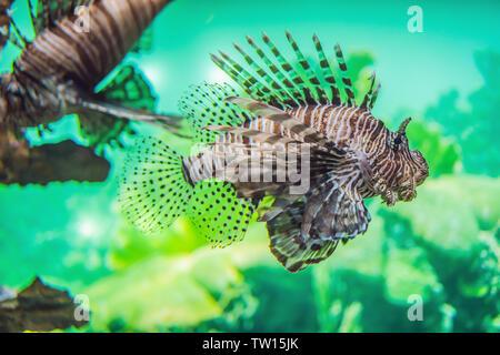aquarium colourfull fishes in dark deep blue water - Stock Photo