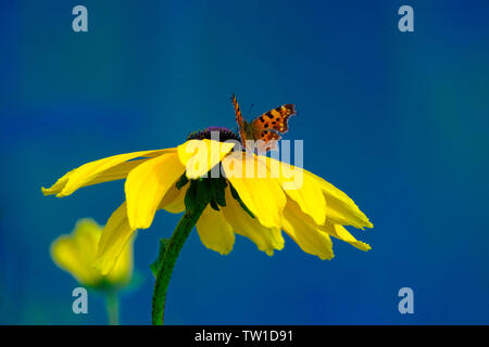 Beautiful butterfly on a yellow flower against the blue sky - Stock Photo