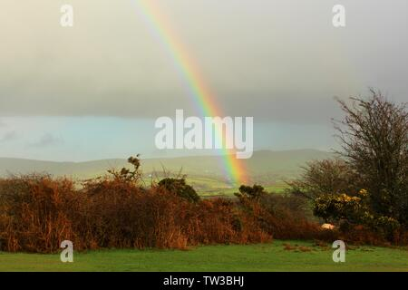 A rainbow on a dark and showery, December day, over Dartmoor National Park in Devon, England. - Stock Photo