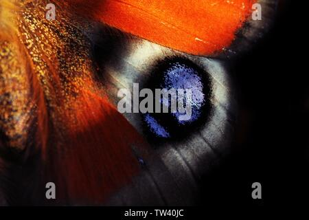 Wildlife in close up - Stock Photo