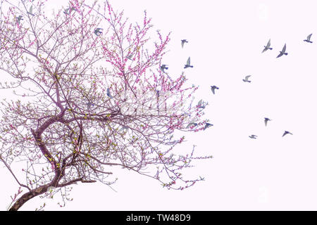Red peach blossoms and birds in the sky form a picture of a warm spring blossom. - Stock Photo