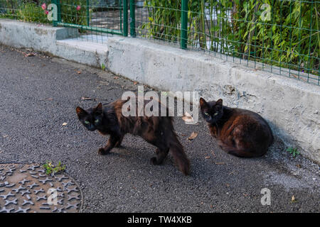 Two dirty stray cats on the city streets. Animal survival in populated areas - Stock Photo