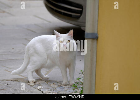 white stray cat on the city street. Animal survival in urban enviroment - Stock Photo