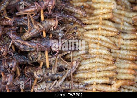 Fried silkworm and grasshopper on sticks, Zhenyuan, Guizhou Province, China - Stock Photo