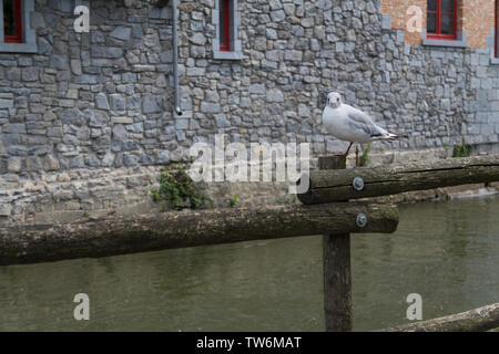 Seagull perched on a wooden bridge - Stock Photo
