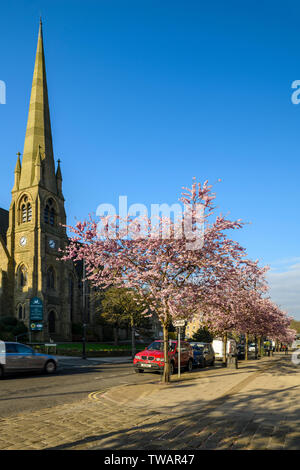 Townscape - beautiful pink blossom on cherry trees & high street church in scenic town centre, springtime - The Grove, Ilkley, Yorkshire, England, UK - Stock Photo