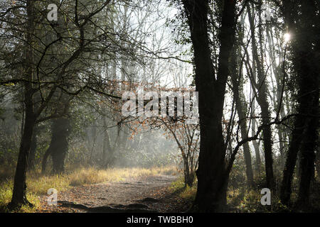 Box Hill, Dorking, Surrey, UK - A cold, misty, mysterious woodland path on a winter morning - Stock Photo